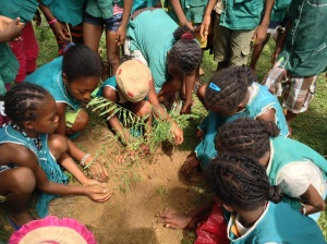 Learning about the importance of reforestation